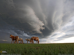 Grazing Horses Photo Landscape Wallpapers National Geographic