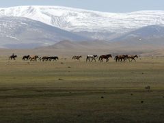 Mongolia Coal Railway To Link With Russia wallpapers