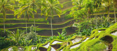 Ubud Wallpapers Image Photos Pictures Backgrounds