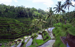 Bali Package 5 Days 4 Nights