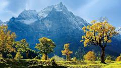 Maple Trees Snow Mountains Austria Wallpapers