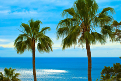 palm fan leaves ocean sky los gigantes tenerife canary islands HD