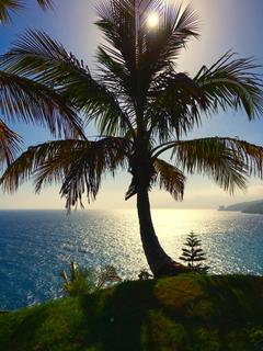 Nature Tenerife Palm Canary Islands palm tree sea image