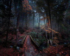 nature Landscape Forest Path Fall Leaves Bulgaria Trees