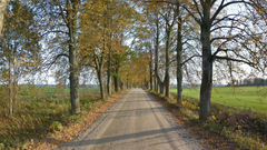 Miscellaneous Tree Grass Field Forest Green Road Trees Autumn