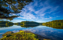 Wallpapers the sky branches Sweden forest Sweden lake