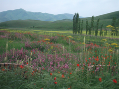 The beauty of the steppes of Kazakhstan Android wallpapers for