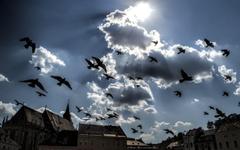 Dark Clouds and Flying Pigeons Brasov Transylvania Romania