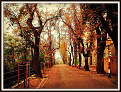 Other Zagreb Autumn Path Street Croatia Golden Leaves Trees Dual