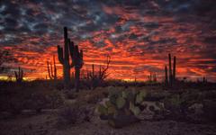 Tucson Arizona Sunset Flaming Sky Desert Landscape With Cactus