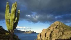 Danzante Island Sea of Cortez Baja California Mexico Full HD