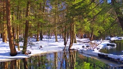 Forests Snow State Nature Forest Lagoons Winter Delaware