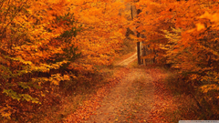 Road Less Travelled In Autumn Connecticut 4K HD Desktop Wallpapers