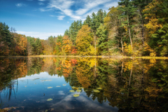 norfolk connecticut lake forest autumn tree reflection HD wallpapers