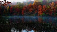 Forests Chatfield Hollow Trails Colors Boulders Connecticut Autumn