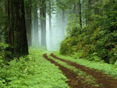 Forest Grassy Road Connecticut Wild 3d Wallpapers Forest HD 16 9