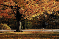 A Guide To The Autumn Palette Of Connecticut s Trees