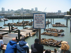 Pier 39 and Fisherman s Wharf Pictures and Stock Photos