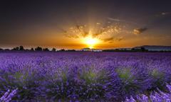 Lavender fields in Guadalajara Spain Desktop Wallpapers on
