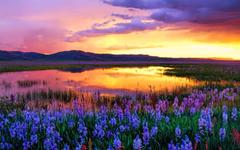 Camas Prairie at Sunset Idaho USA widescreen wallpapers