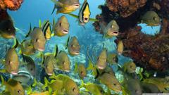 Florida Keys National Marine Sanctuary HD desktop wallpapers
