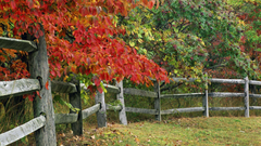 Autumn park indiana state county brown fence wallpapers
