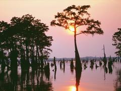 Louisiana image Louisiana Wallpapers