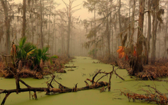 Louisiana swamp wallpapers