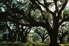 ernst haas oak alley plantation louisiana kodachrome 1961 high