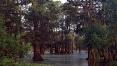 Bald Cypress Trees at Sunset Louisiana HD Wallpapers