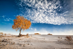 nature photography landscape dune sand trees clouds shrubs white