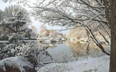 Winter In Missouri Botanical Garden Wallpapers