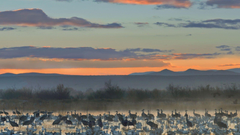 Apache wildlife national cranes new mexico geese wallpapers