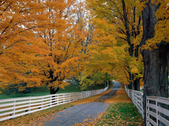 Forest Autumn Hampshire Backroad Scenic New Fence Forest Wallpapers