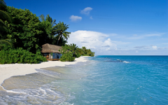 Wallpapers Kuramathi Maldives tropics beach sand palm trees