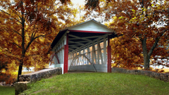 Bridges Knisely Covered Bridge Bedford County Pennsylvania Trees