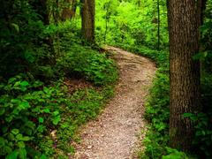 united states park codorus state park pennsylvania bush tree trunk