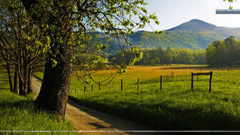 Hyatt Lane in Spring Great Smoky Mountains Tennessee Wallpapers