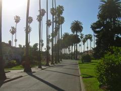 File Palm Trees in San Jose California jpg