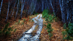 Forests paths hdr photography south dakota mystical wallpapers