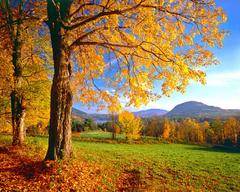 Fields Colorful Vermont Fields Peaceful Wonderful Tree Amazing