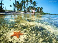 Starfish Yucatan Peninsula Mexico