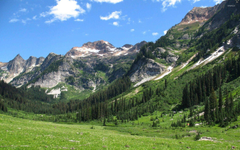 Spider meadow Washington State Park wallpapers