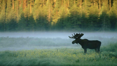 Mist Wyoming standing Yellowstone National Park wallpapers