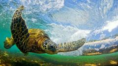 Hawaiian wallpapers desktop