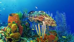 Coral Reefs Sea Gilbert Kiribati Paradisiac Blue Beach Lagoon