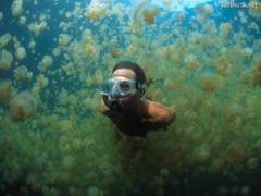 swimming through jellyfish in palau micronesia