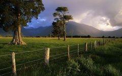 Storm Lit Over Kahikatea Trees and Fence in New Zealand iPhone