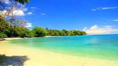 Beaches Islands Palm Guadalcanal Beach Trees Island Water Emerald