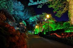 Gardens Roads New Zealand Wellington Botanical Night Street lights